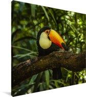 Reuzentoekan op een tak Canvas 50x50 cm - Foto print op Canvas schilderij (Wanddecoratie woonkamer / slaapkamer)