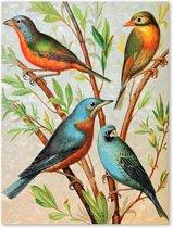 Canvas Schilderij Vogels - Botanisch