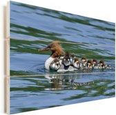 Grote zaagbek zwemt met haar kuikentjes op de rug door het water Vurenhout met planken 60x40 cm - Foto print op Hout (Wanddecoratie)