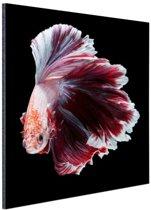 Sierlijke vis zwarte achtergrond Aluminium 120x180 cm - Foto print op Aluminium (metaal wanddecoratie) XXL / Groot formaat!