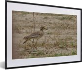 Foto in lijst - Mooie griel op een steppe fotolijst zwart met witte passe-partout 60x40 cm - Poster in lijst (Wanddecoratie woonkamer / slaapkamer)
