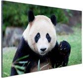 Reuzenpanda Aluminium 180x120 cm - Foto print op Aluminium (metaal wanddecoratie) XXL / Groot formaat!
