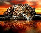 Diamond painting - luipaard - 30 x 40 cm