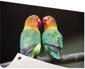 Lovebirds papegaaitjes  Tuinposter 60x40 cm - Foto op Tuinposter / Schilderijen voor buiten (tuin decoratie)