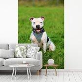 Fotobehang vinyl - Glimlachende Staffordshire Bull Terrier breedte 335 cm x hoogte 500 cm - Foto print op behang (in 7 formaten beschikbaar)