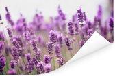 Zonovergoten lavendelveld Poster 30x20 cm - klein - Foto print op Poster (wanddecoratie woonkamer / slaapkamer)