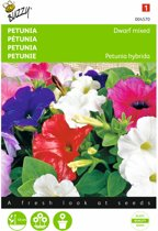 Petunia - Petunia nana compacta - set van 8 stuks