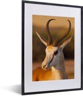 Foto in lijst - Close up van een Gazelle tijdens zonsondergang fotolijst zwart met witte passe-partout klein 30x40 cm - Poster in lijst (Wanddecoratie woonkamer / slaapkamer)