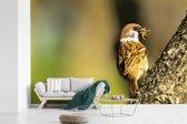 Fotobehang vinyl - Mooie ringmus eet in een boom breedte 420 cm x hoogte 280 cm - Foto print op behang (in 7 formaten beschikbaar)