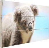 Een close-up van een koala Hout 60x40 cm - Foto print op Hout (Wanddecoratie)