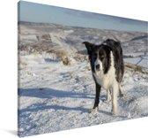 Een Border Collie op de sneeuwheuvels Canvas 180x120 cm - Foto print op Canvas schilderij (Wanddecoratie woonkamer / slaapkamer) / Huisdieren Canvas Schilderijen XXL / Groot formaat!