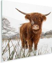 Schotse hooglander in de winter Plexiglas 90x90 cm - Foto print op Glas (Plexiglas wanddecoratie)
