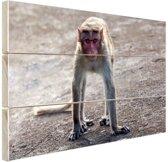 Lopende aap Hout 60x40 cm - Foto print op Hout (Wanddecoratie)