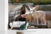 Fotobehang vinyl - Twee schattige Fennek vossen op een boomstam breedte 525 cm x hoogte 350 cm - Foto print op behang (in 7 formaten beschikbaar)