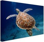 Zeeschildpad  Canvas 80x60 cm - Foto print op Canvas schilderij (Wanddecoratie woonkamer / slaapkamer) / Dieren Canvas Schilderij