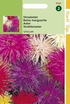 Hortitops Zaden - Callistephus Chinensis Unicum Gemengd
