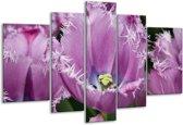 Glasschilderij Tulpen   Paars, Wit, Groen   170x100cm 5Luik   Foto print op Glas    F002837