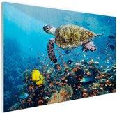 Schildpad bij koraalrif Glas 90x60 cm - Foto print op Glas (Plexiglas wanddecoratie)