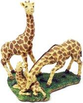 Giraffe decoratie voor binnen en buiten – beeld van 3 giraffebeelden   GerichteKeuze