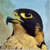 Canvas Schilderij Valk - Vogel