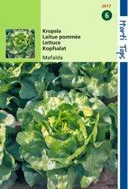 Kropsla Fiorella -  Lactuca sativa - set van 4 stuks