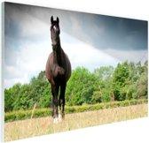 Merrie in een veld Glas 90x60 cm - Foto print op Glas (Plexiglas wanddecoratie)