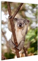 Zwaaiende koala Glas 20x30 cm - Foto print op Glas (Plexiglas wanddecoratie)