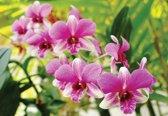 Fotobehang Orchids Pink | XL - 208cm x 146cm | 130g/m2 Vlies