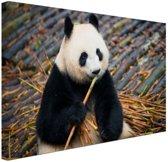 Reuzepanda die bamboe eet Canvas 80x60 cm - Foto print op Canvas schilderij (Wanddecoratie woonkamer / slaapkamer) / Dieren Canvas Schilderijen