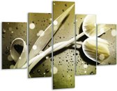 Glasschilderij Tulp | Grijs, Wit | 100x70cm 5Luik | Foto print op Glas |  F005136