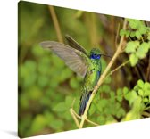 Mooie groene violetoorkolibrie spreidt zijn vleugels uit Canvas 60x40 cm - Foto print op Canvas schilderij (Wanddecoratie woonkamer / slaapkamer)