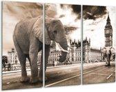 Glasschilderij Olifant   Grijs, Zwart   120x80cm 3Luik   Foto print op Glas    F003667