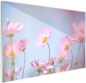 FotoCadeau.nl - Prachtige lichtroze bloemen Glas 120x80 cm - Foto print op Glas (Plexiglas wanddecoratie)