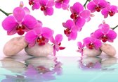 Fotobehang Flowers Orchids | XL - 208cm x 146cm | 130g/m2 Vlies