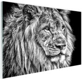 Leeuw in de winter  Glas 30x20 cm - Foto print op Glas (Plexiglas wanddecoratie)