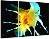 Glasschilderij Bloem | Zwart, Geel, Blauw | 120x80cm 3Luik | Foto print op Glas |  F004141