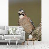 Fotobehang vinyl - Foto van een gaai zittend op een tak breedte 225 cm x hoogte 280 cm - Foto print op behang (in 7 formaten beschikbaar)