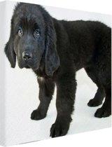 FotoCadeau.nl - Schattige zwarte puppy Canvas 30x20 cm - Foto print op Canvas schilderij (Wanddecoratie)