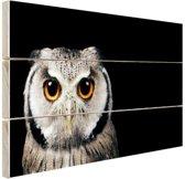 Close-up uil Hout 60x40 cm - Foto print op Hout (Wanddecoratie)