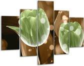 Glasschilderij Tulp | Groen, Bruin | 100x70cm 5Luik | Foto print op Glas |  F005092