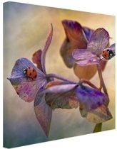 Twee lieveheersbeestjes op bloemen Canvas 60x40 cm - Foto print op Canvas schilderij (Wanddecoratie)