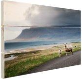 IJslandse schapen Hout 60x40 cm - Foto print op Hout (Wanddecoratie)