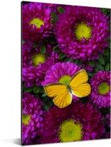 Een oranje vlinder op Aster bloemen Aluminium 120x180 cm - Foto print op Aluminium (metaal wanddecoratie) XXL / Groot formaat!
