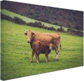 Koe en kalf in een weiland Canvas 30x20 cm - Foto print op Canvas schilderij (Wanddecoratie)
