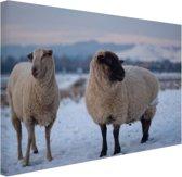 FotoCadeau.nl - Twee schapen in de sneeuw Canvas 30x20 cm - Foto print op Canvas schilderij (Wanddecoratie)