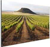 Landelijke wijngaard fotoafdruk Aluminium 90x60 cm - Foto print op Aluminium (metaal wanddecoratie)