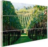 Wijngaard in Brazilie foto Hout 60x40 cm - Foto print op Hout (Wanddecoratie)