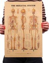 Anatomie Poster - Skelet - Menselijk Lichaam  - Educatief - Gedetailleerd