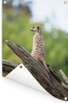 Stokstaartje in zijn habitat Tuinposter 40x60 cm - klein - Tuindoek / Buitencanvas / Schilderijen voor buiten (tuin decoratie)