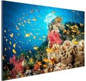 Koraal met vissen Aluminium 90x60 cm - Foto print op Aluminium (metaal wanddecoratie)